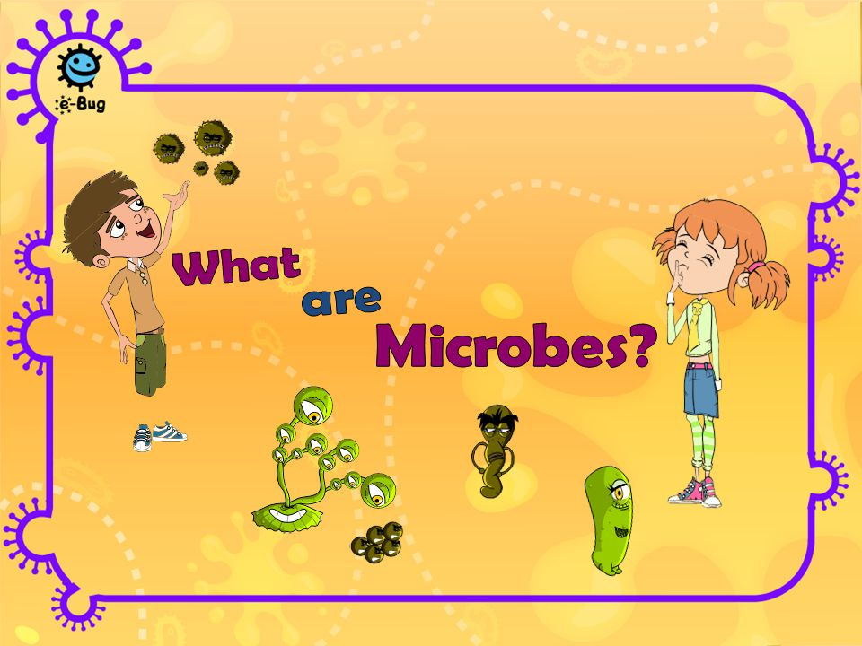 Microbes are living organisms They are so small we need a microscope to see them They come in different shapes and sizes They are found EVERYWHERE.