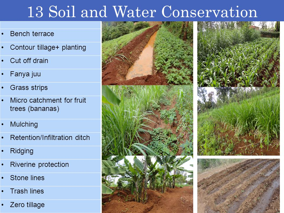 13 Soil and Water Conservation Practices Bench terrace Contour tillage+ planting Cut off drain Fanya juu Grass strips Micro catchment for fruit trees
