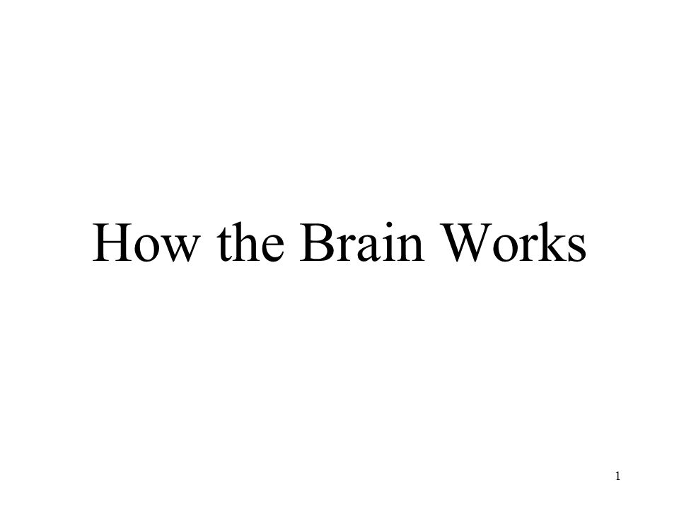How the Brain Works 1