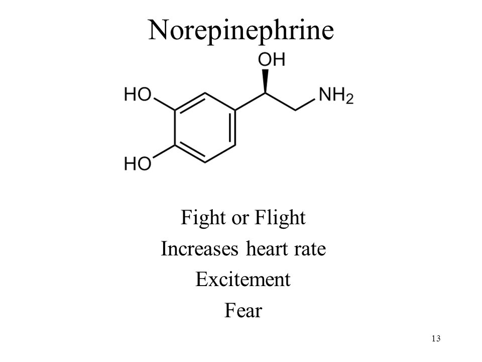 Norepinephrine Fight or Flight Increases heart rate Excitement Fear 13