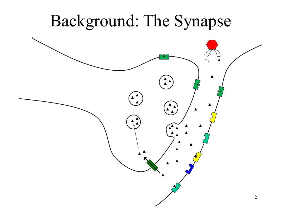Background: The Synapse 2