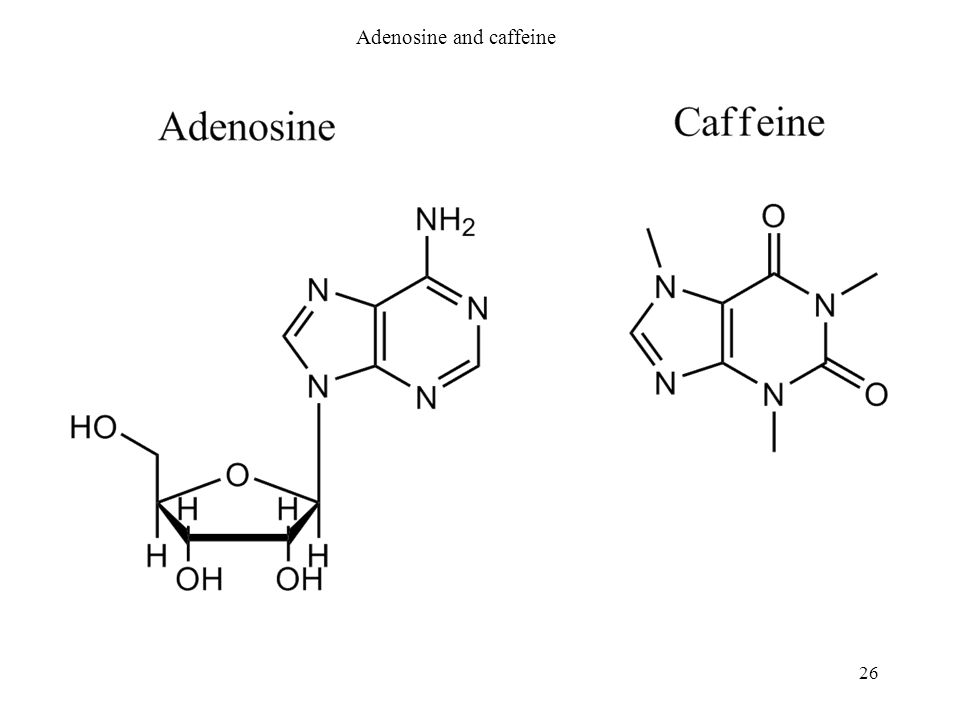 Adenosine and caffeine 26