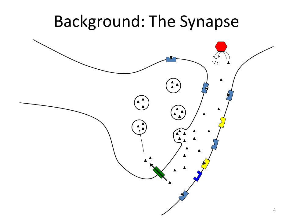 Background: The Synapse 4