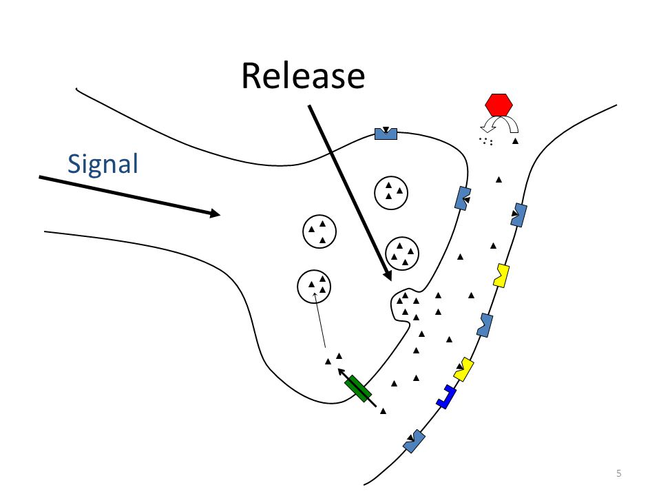 Release Signal 5