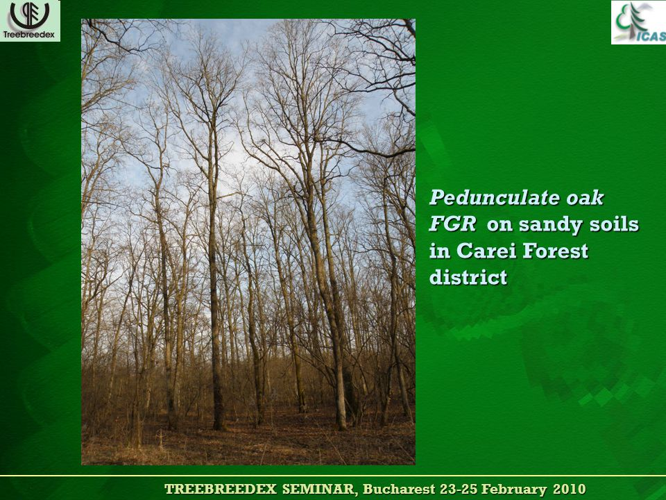 TREEBREEDEX SEMINAR, Bucharest 23-25 February 2010 TREEBREEDEX SEMINAR, Bucharest 23-25 February 2010 Pedunculate oak FGR on sandy soils in Carei Forest district
