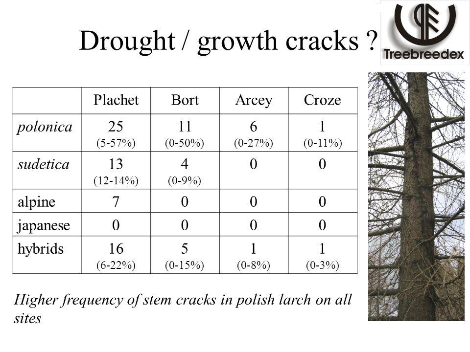 Drought / growth cracks ? PlachetBortArceyCroze polonica25 (5-57%) 11 (0-50%) 6 (0-27%) 1 (0-11%) sudetica13 (12-14%) 4 (0-9%) 00 alpine7000 japanese0