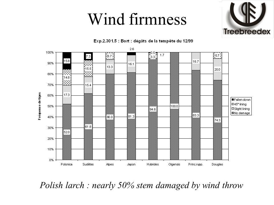 Wind firmness Polish larch : nearly 50% stem damaged by wind throw