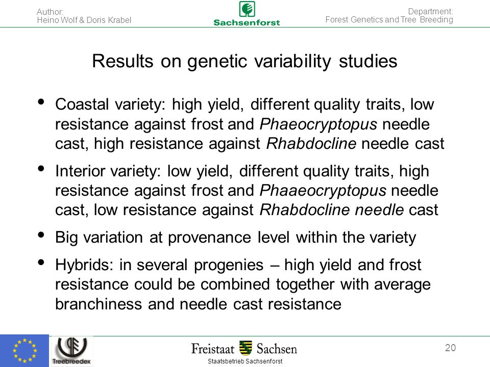 Staatsbetrieb Sachsenforst Author: Heino Wolf & Doris Krabel 20 Department: Forest Genetics and Tree Breeding Coastal variety: high yield, different quality traits, low resistance against frost and Phaeocryptopus needle cast, high resistance against Rhabdocline needle cast Interior variety: low yield, different quality traits, high resistance against frost and Phaaeocryptopus needle cast, low resistance against Rhabdocline needle cast Big variation at provenance level within the variety Hybrids: in several progenies – high yield and frost resistance could be combined together with average branchiness and needle cast resistance Results on genetic variability studies