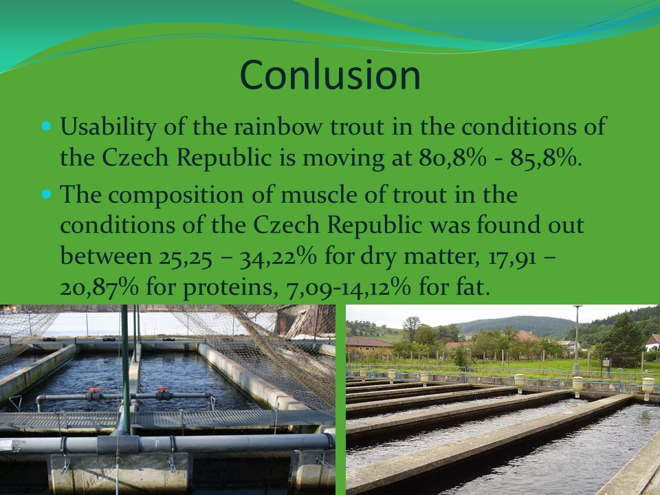 Conlusion Usability of the rainbow trout in the conditions of the Czech Republic is moving at 80,8% - 85,8%.