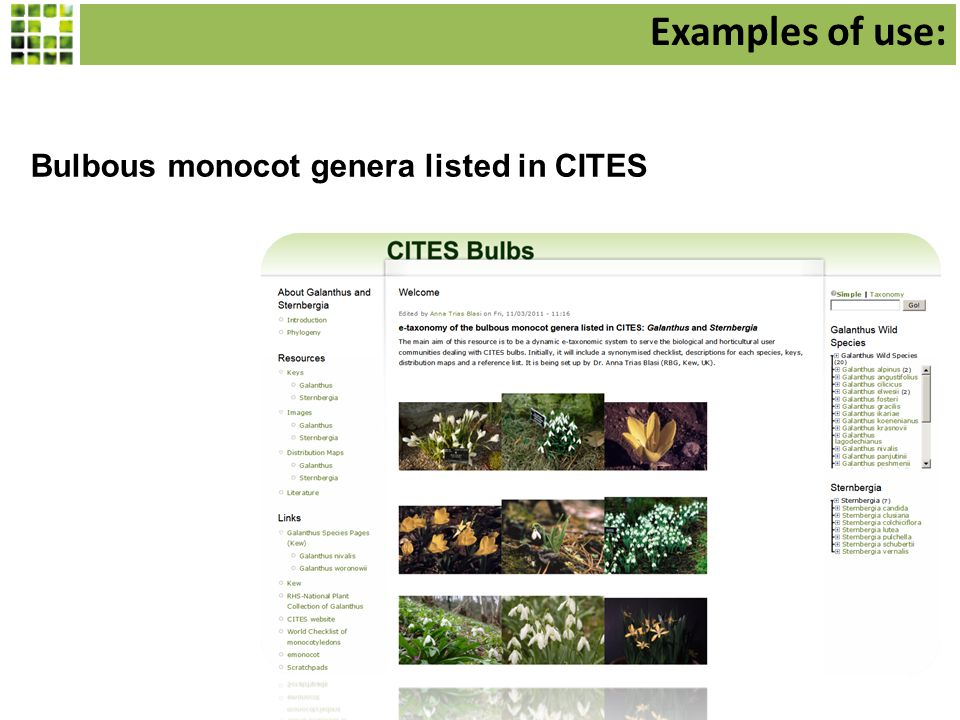 Bulbous monocot genera listed in CITES