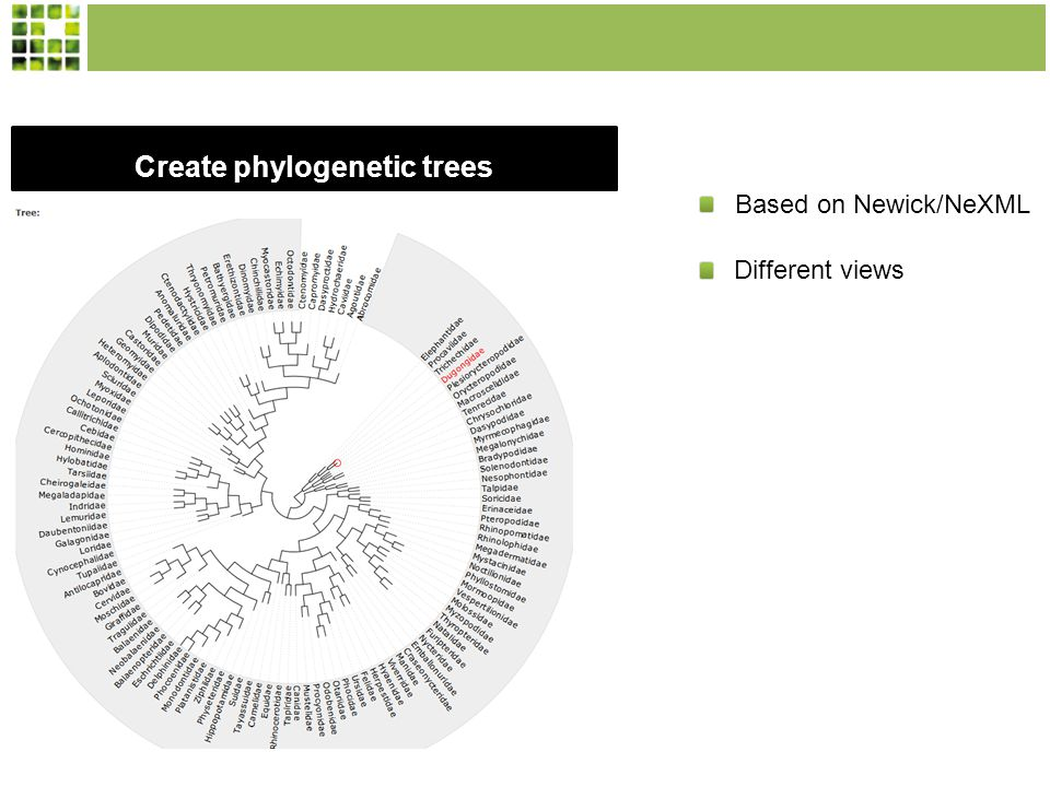 Create phylogenetic trees Based on Newick/NeXML Different views
