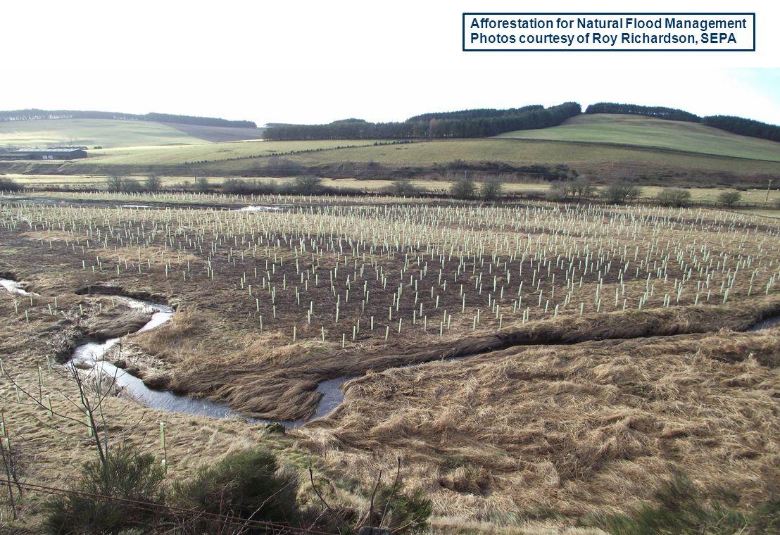 Afforestation for Natural Flood Management Photos courtesy of Roy Richardson, SEPA