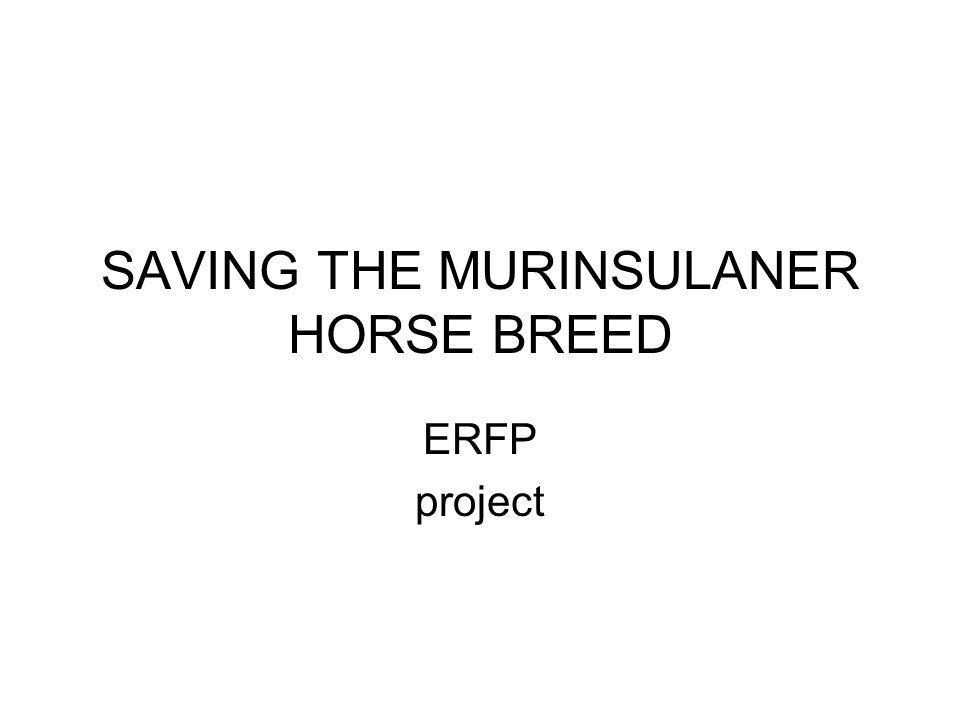 SAVING THE MURINSULANER HORSE BREED ERFP project