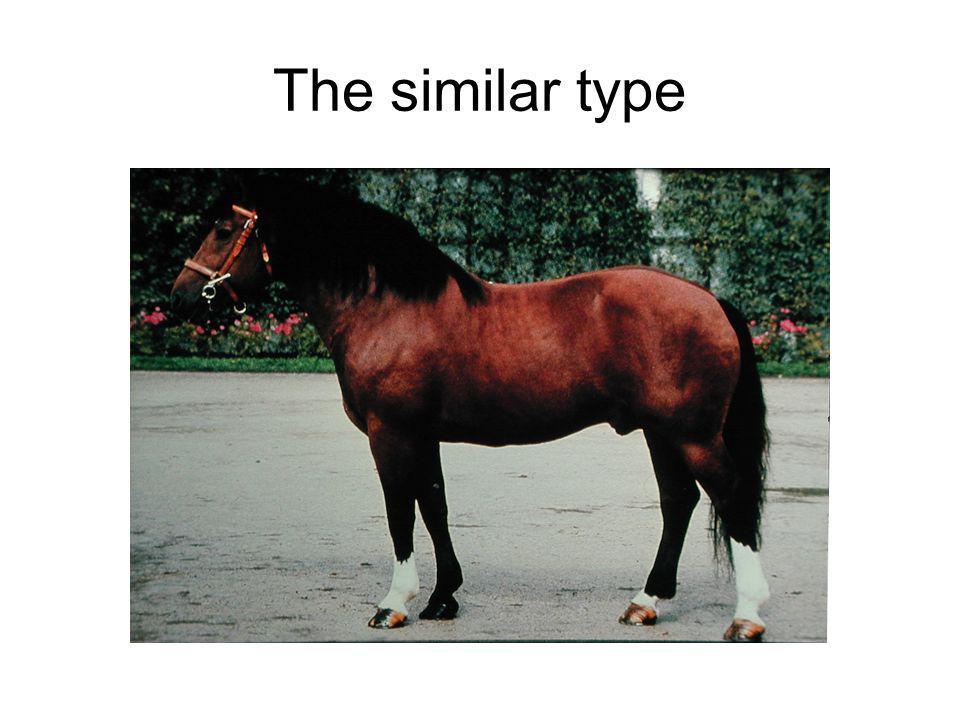 The similar type