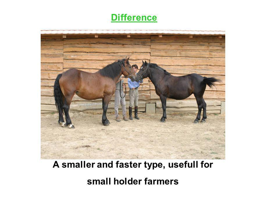 Difference A smaller and faster type, usefull for small holder farmers
