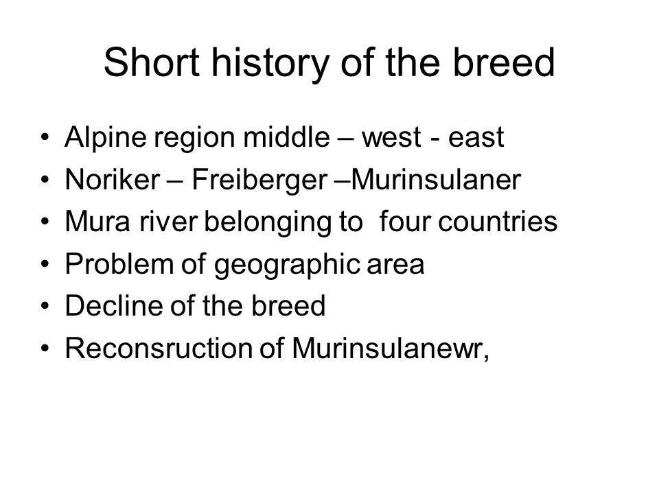 Short history of the breed Alpine region middle – west - east Noriker – Freiberger –Murinsulaner Mura river belonging to four countries Problem of geographic area Decline of the breed Reconsruction of Murinsulanewr,