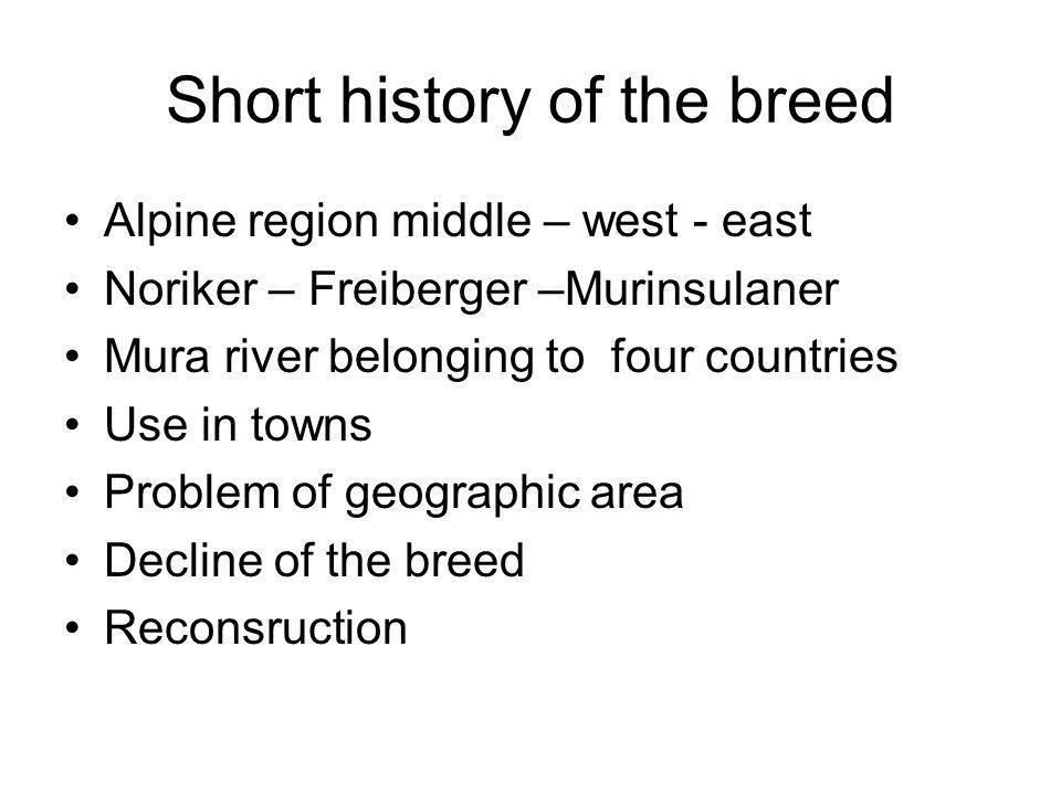 Short history of the breed Alpine region middle – west - east Noriker – Freiberger –Murinsulaner Mura river belonging to four countries Use in towns Problem of geographic area Decline of the breed Reconsruction