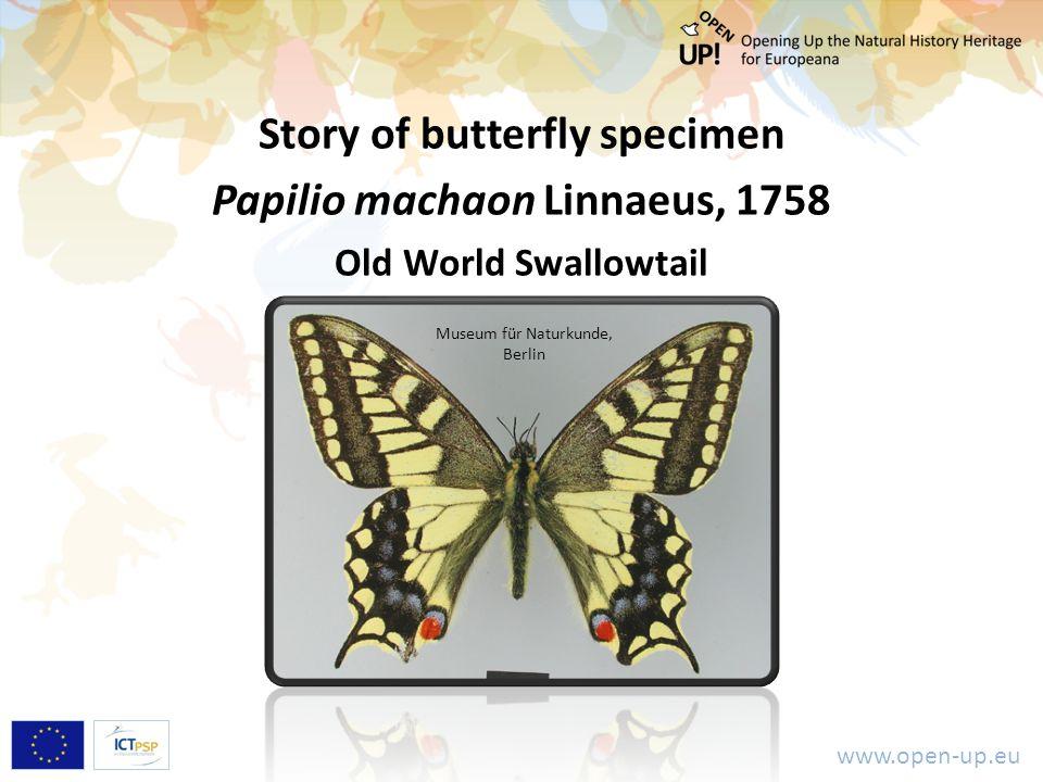 www.open-up.eu Story of butterfly specimen Papilio machaon Linnaeus, 1758 Old World Swallowtail Museum für Naturkunde, Berlin