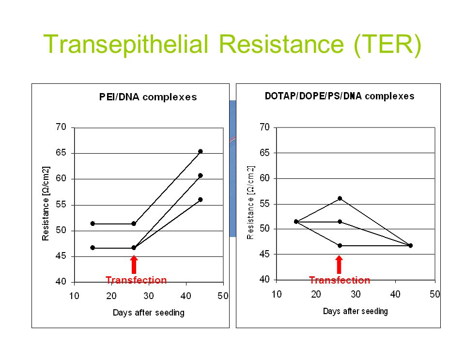 Transepithelial Resistance (TER) To determine the time course and extent of tight junction formation, TER of ARPE-19 monolayers was recorded 2 weeks a