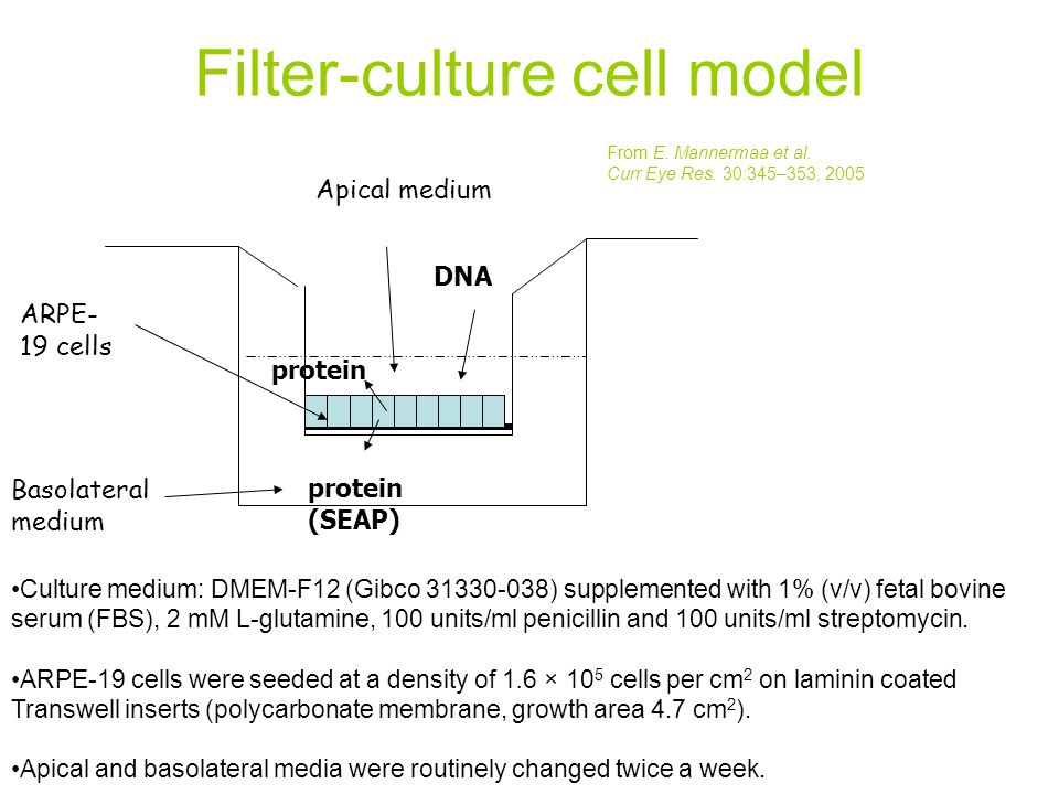 Filter-culture cell model From E. Mannermaa et al. Curr Eye Res. 30:345–353, 2005 Culture medium: DMEM-F12 (Gibco 31330-038) supplemented with 1% (v/v