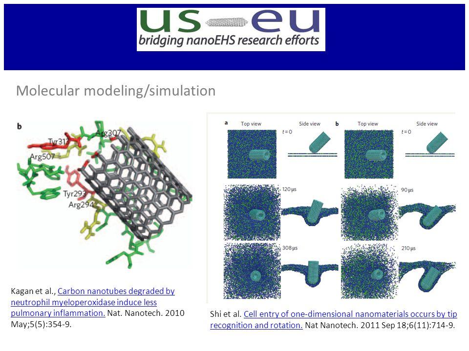Kagan et al., Carbon nanotubes degraded by neutrophil myeloperoxidase induce less pulmonary inflammation.