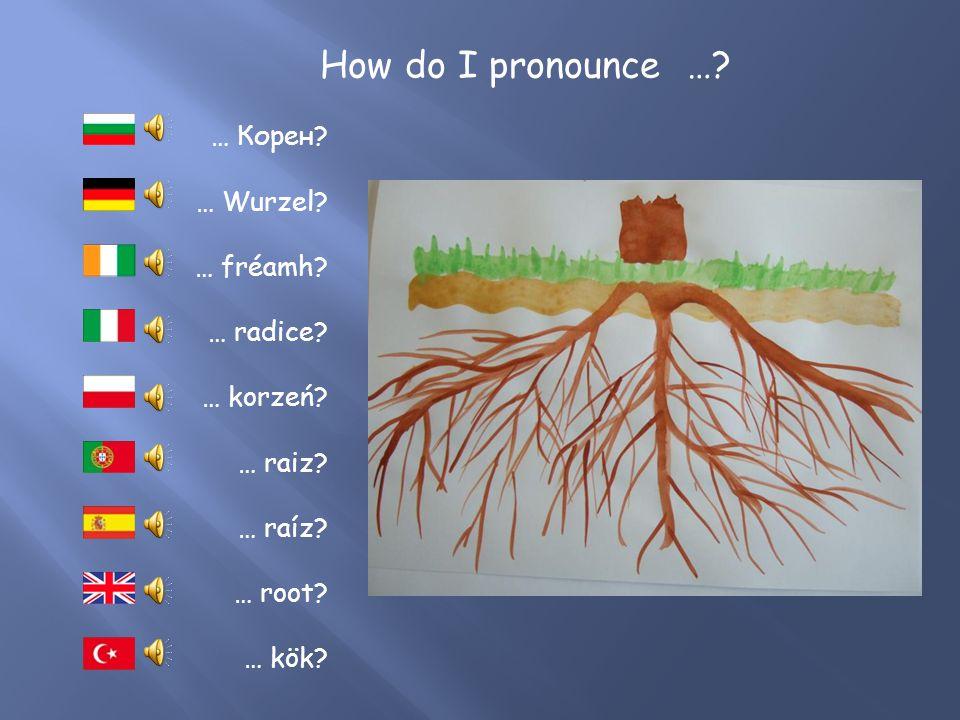 How do I pronounce …. … Apfelbaum. … macieira. … drzewo jabłoni.