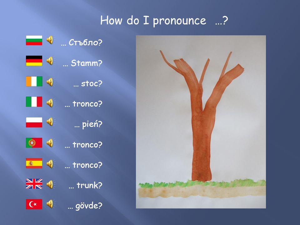 How do I pronounce ….… Wurzel. … raiz. … korzeń. … fréamh.