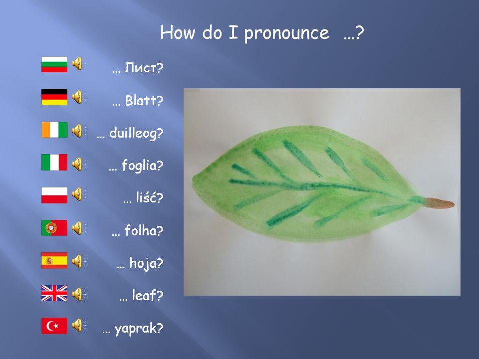 How do I pronounce …? … Ast? … ramo? … konar? … géag? … kлон? … rama? … branch? … dal? … ramo?