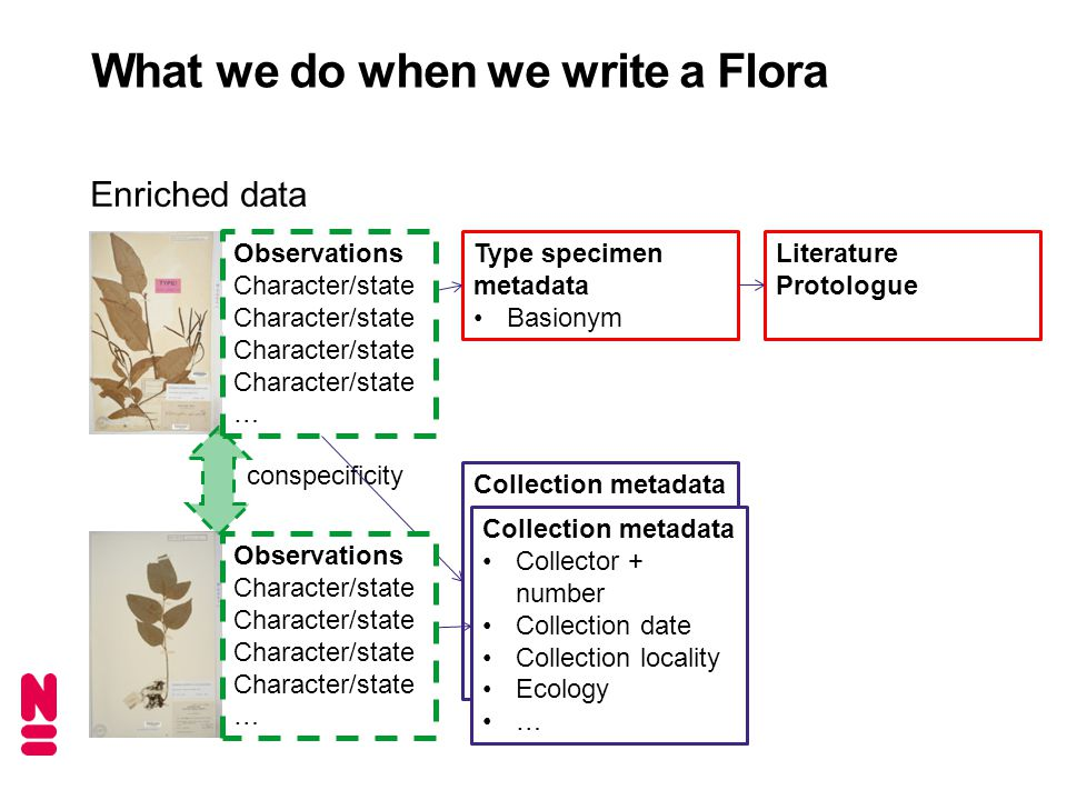 Enriched data What we do when we write a Flora Type specimen metadata Basionym conspecificity Collection metadata Collector + number Collection date Collection locality Ecology … Collection metadata Collector + number Collection date Collection locality Ecology … Observations Character/state … Observations Character/state … Literature Protologue