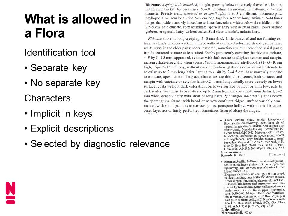What is allowed in a Flora Identification tool Separate key No separate key Characters Implicit in keys Explicit descriptions Selected by diagnostic relevance