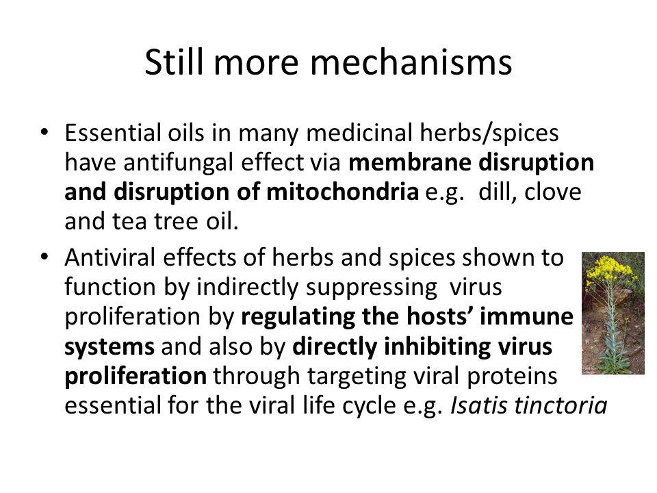 Plant chemicals have antibiotic properties In general, medicinal plants more effective against gram- positive than gram-negative bacteria.