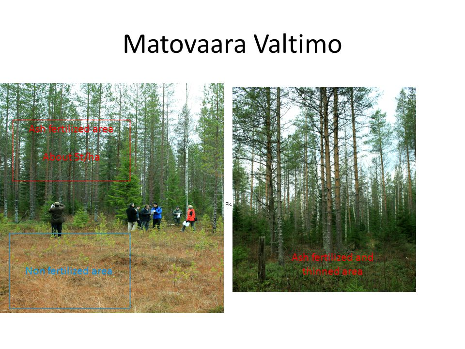 Matovaara Valtimo Non fertilized area Ash fertilized area About 5t/ha Ash fertilized and thinned area
