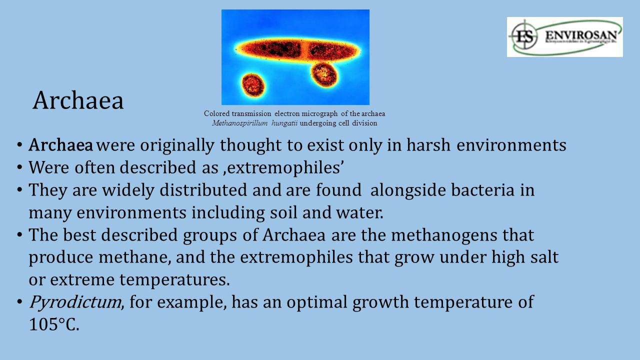 Archaea Archaea were originally thought to exist only in harsh environments Were often described as 'extremophiles' They are widely distributed and ar