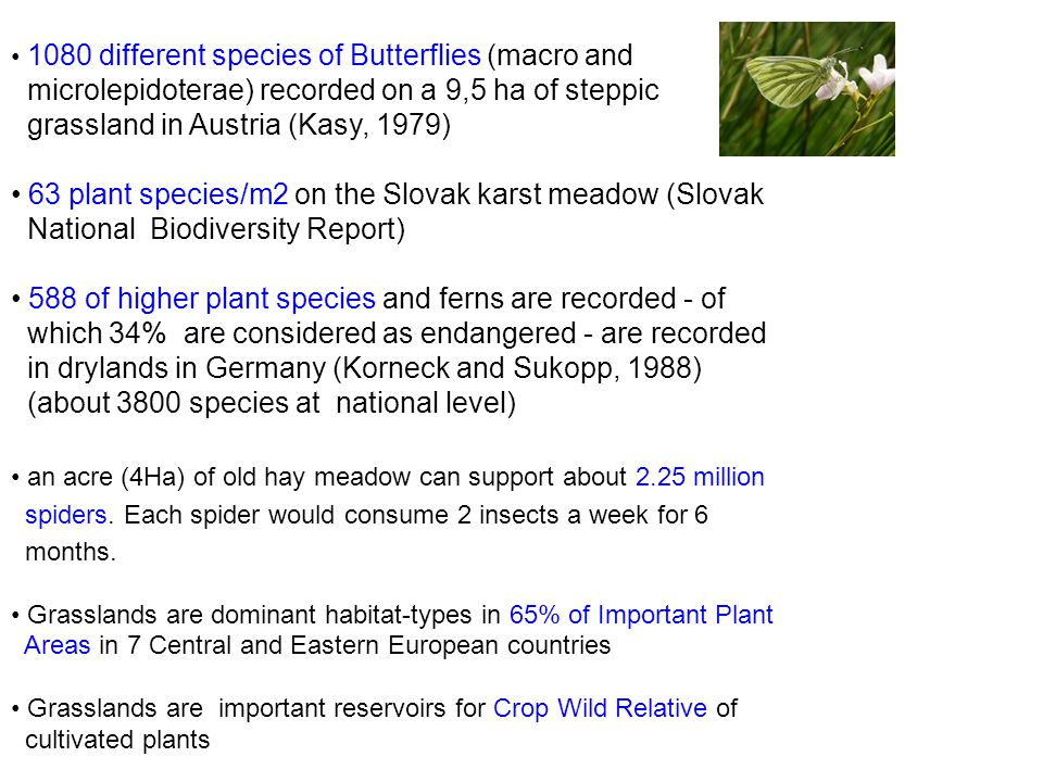 1080 different species of Butterflies (macro and microlepidoterae) recorded on a 9,5 ha of steppic grassland in Austria (Kasy, 1979) 63 plant species/