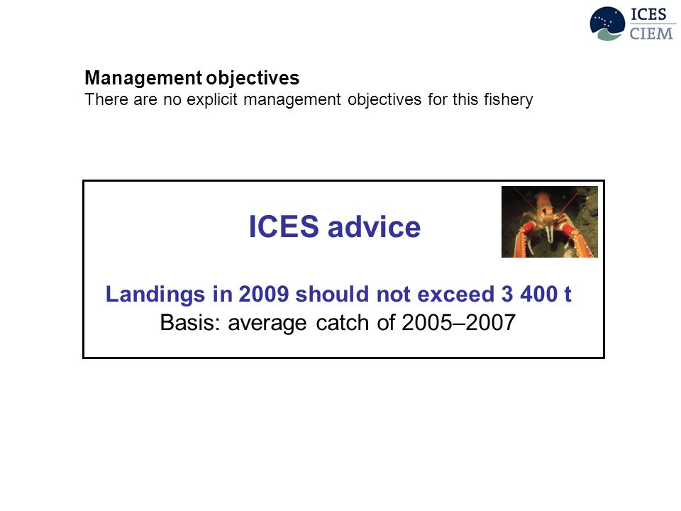 ICES advice Landings in 2009 should not exceed 3 400 t Basis: average catch of 2005–2007 Management objectives There are no explicit management objectives for this fishery