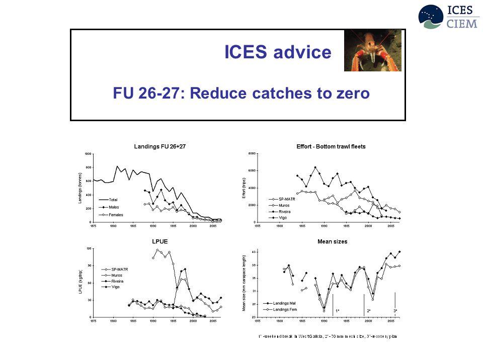 ICES advice FU 26-27: Reduce catches to zero