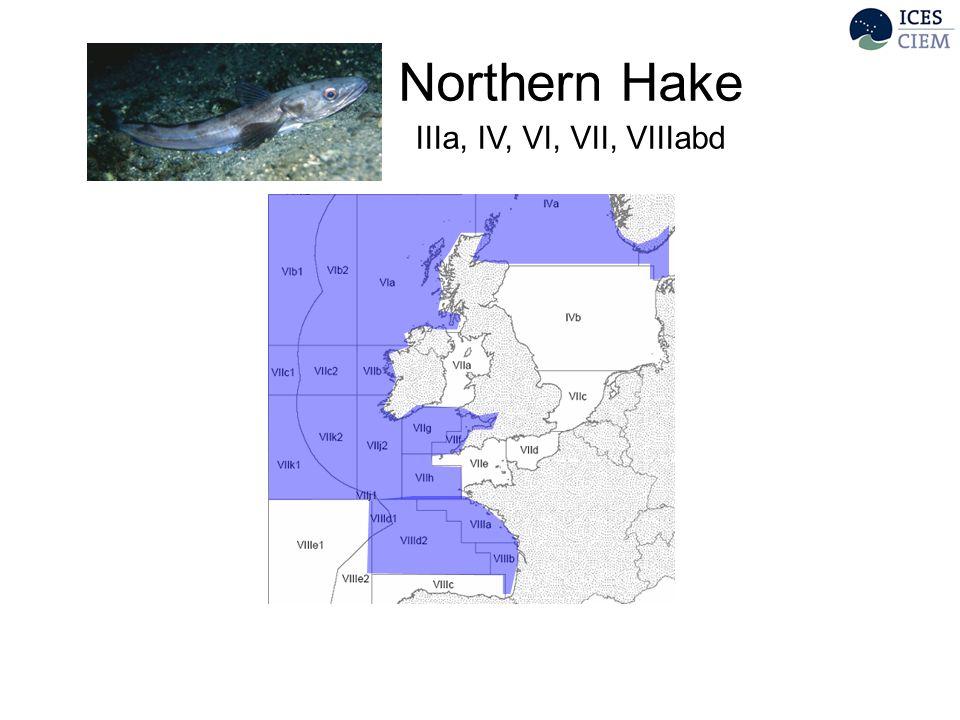 Northern Hake IIIa, IV, VI, VII, VIIIabd