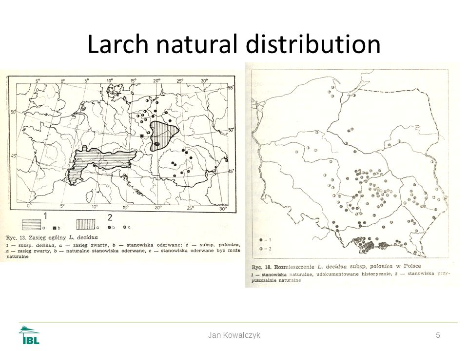 5 Larch natural distribution Jan Kowalczyk