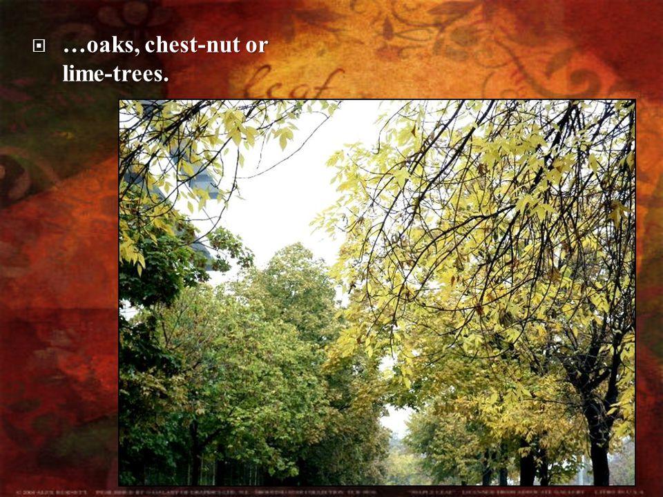  …oaks,  …oaks, chest-nut or lime-trees.