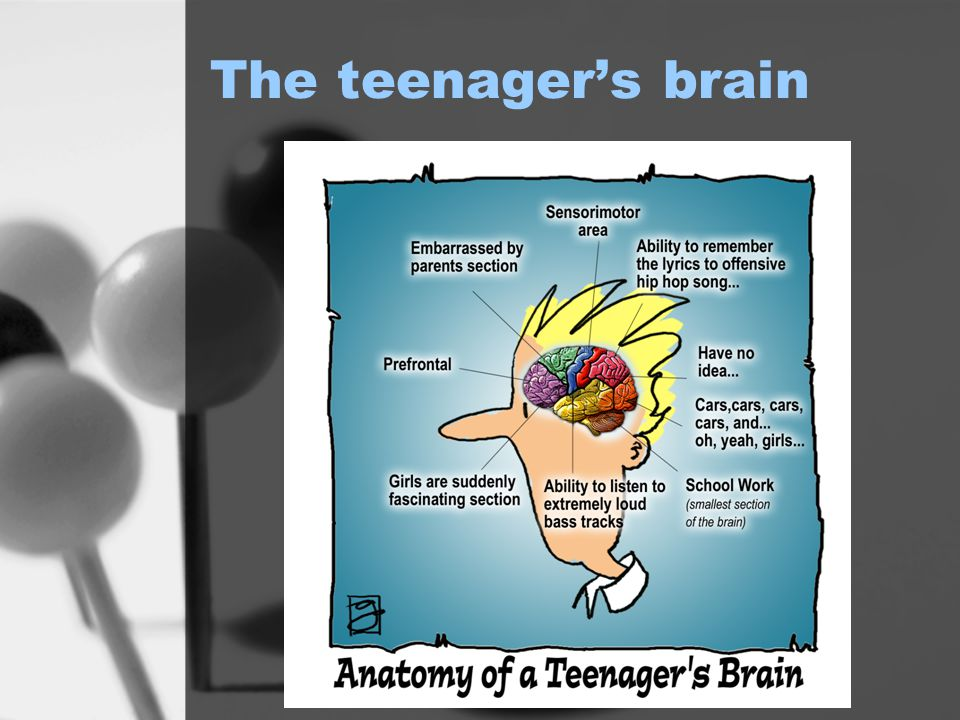 The teenager's brain