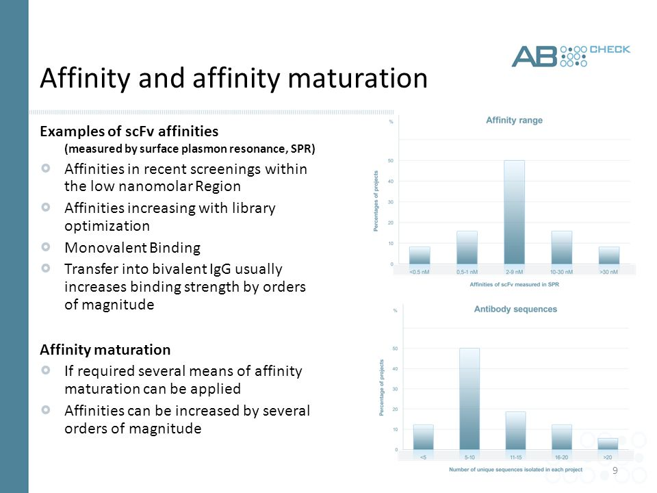 9 Affinity and affinity maturation Examples of scFv affinities (measured by surface plasmon resonance, SPR) Affinities in recent screenings within the low nanomolar Region Affinities increasing with library optimization Monovalent Binding Transfer into bivalent IgG usually increases binding strength by orders of magnitude Affinity maturation If required several means of affinity maturation can be applied Affinities can be increased by several orders of magnitude