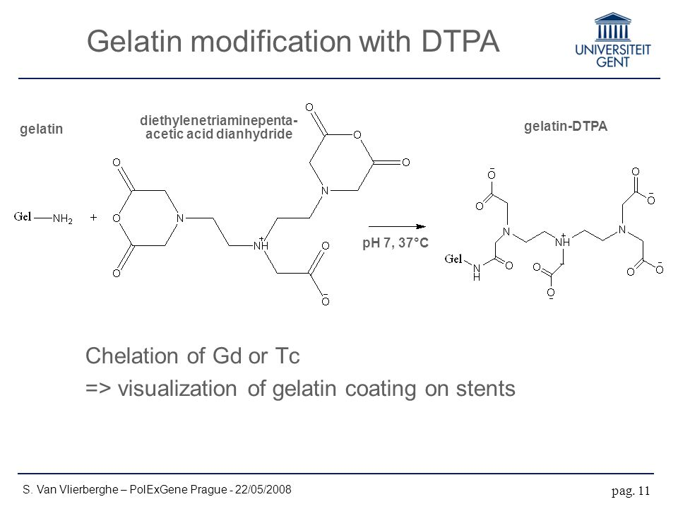 Gelatin modification with DTPA S.Van Vlierberghe – PolExGene Prague - 22/05/2008 pag.