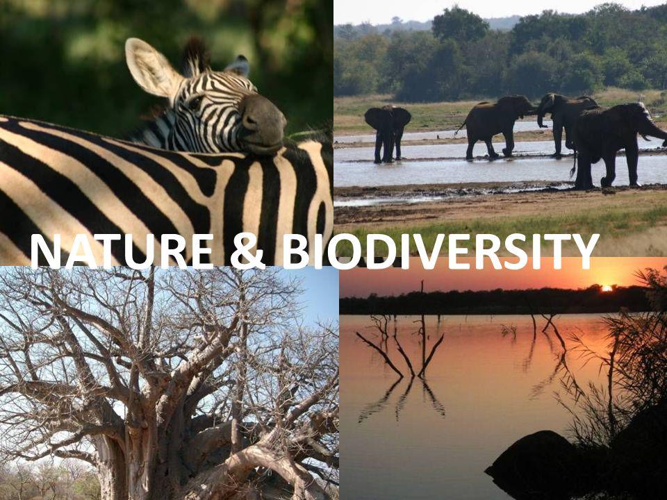 NATURE & BIODIVERSITY