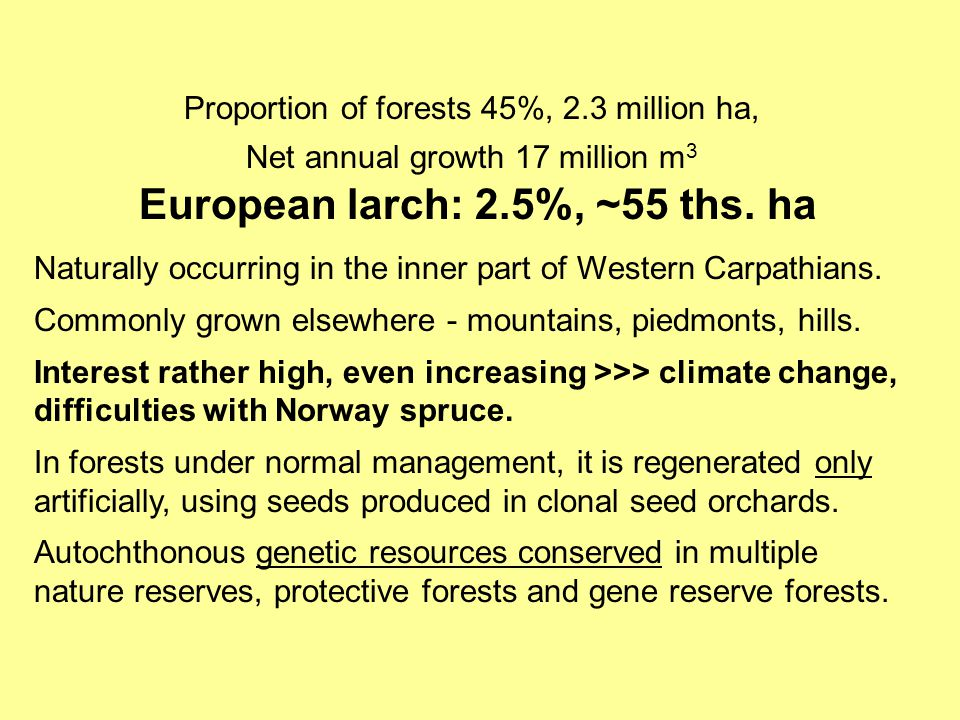 Proportion of forests 45%, 2.3 million ha, Net annual growth 17 million m 3 European larch: 2.5%, ~55 ths. ha Naturally occurring in the inner part of