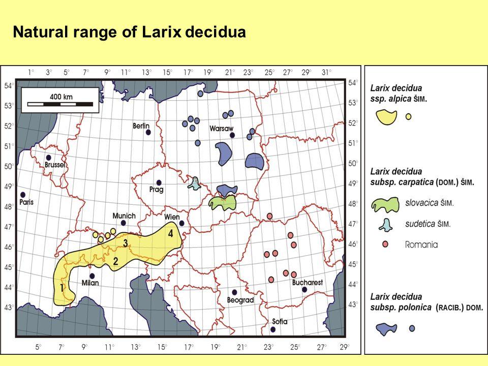 Natural range of Larix decidua