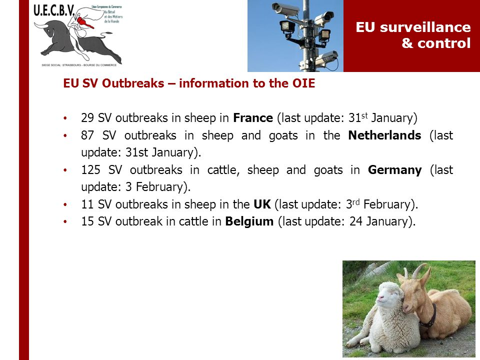 EU SV Outbreaks – information to the OIE 29 SV outbreaks in sheep in France (last update: 31 st January) 87 SV outbreaks in sheep and goats in the Net