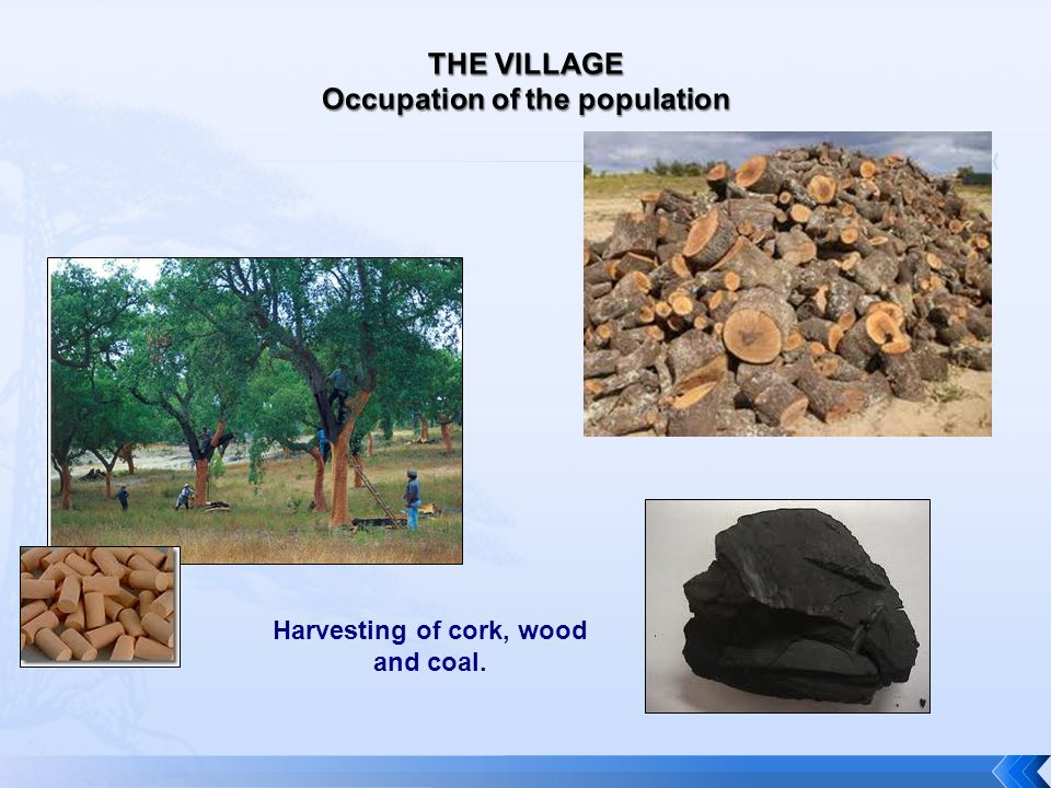 Harvesting of cork, wood and coal.
