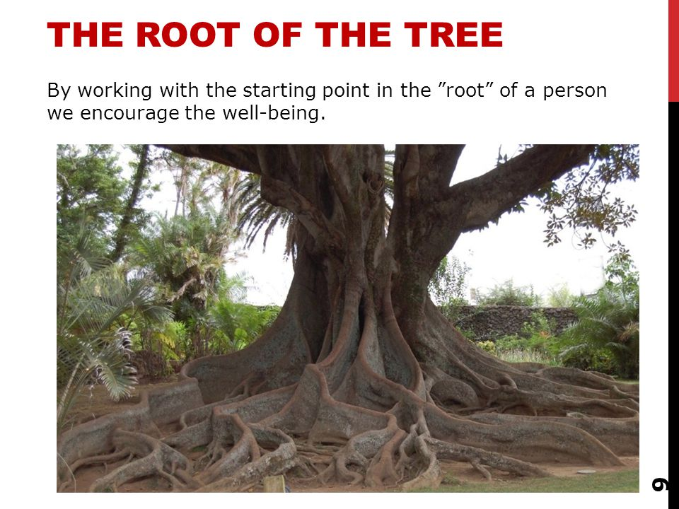 9 THE ROOT OF THE TREE By working with the starting point in the root of a person we encourage the well-being.