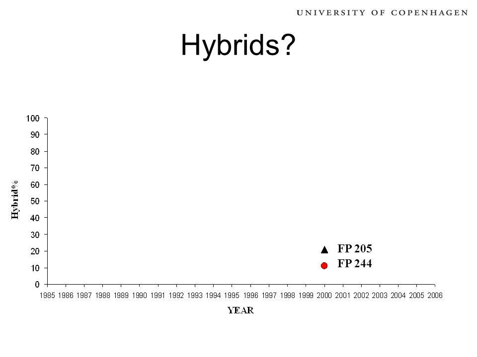 Hybrids? FP 244 FP 205
