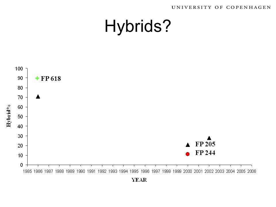 Hybrids? FP 244 FP 205 + FP 618